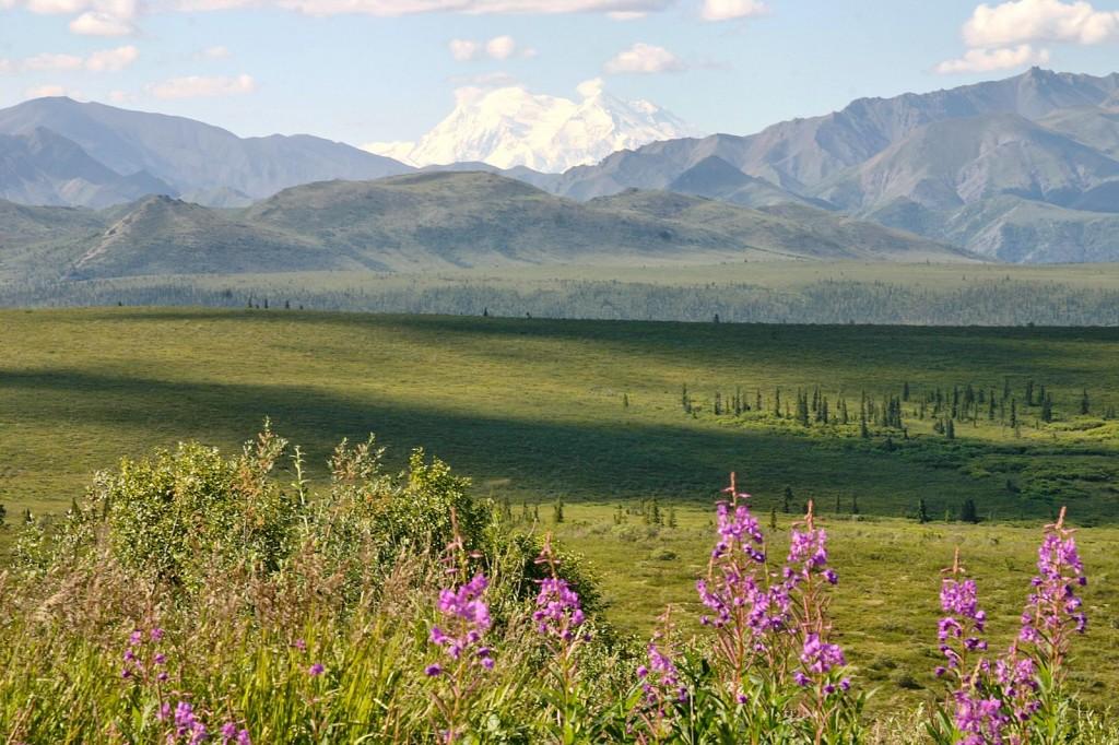 Denali View east of the Teklanika.