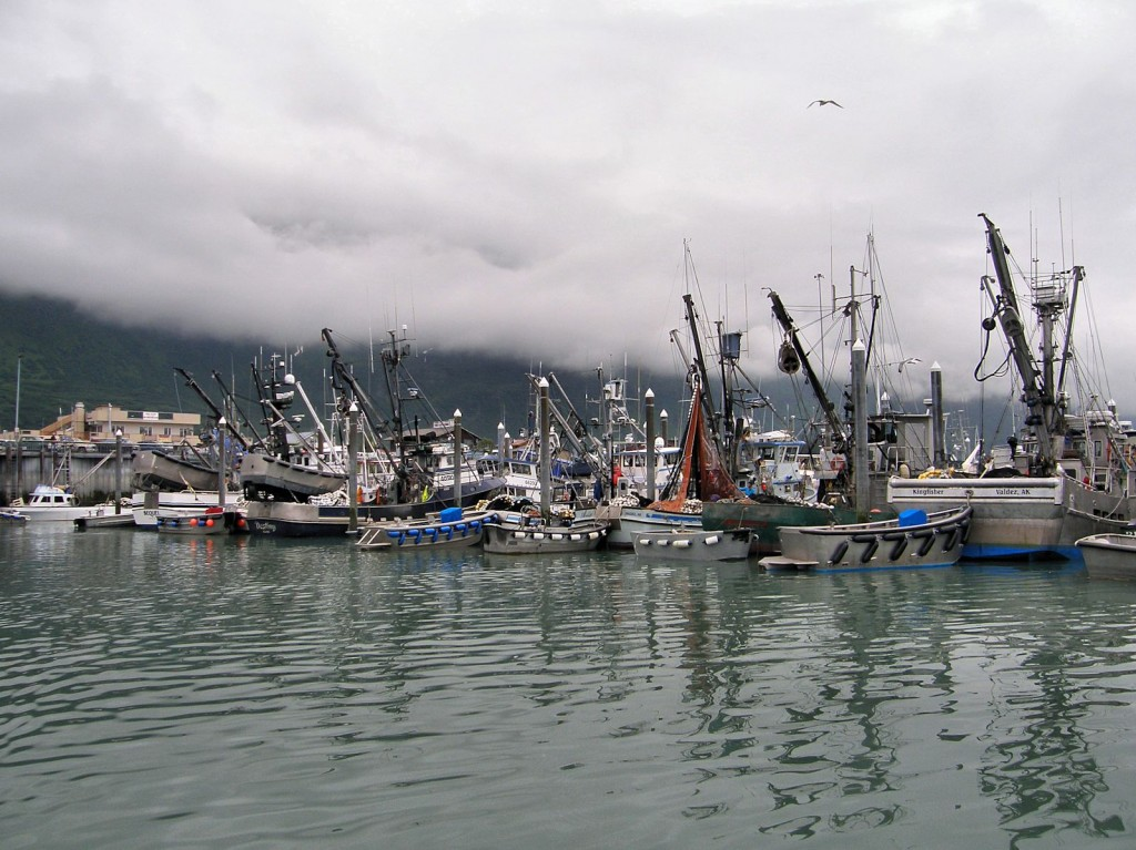 Part of the Valdez fishing fleet.